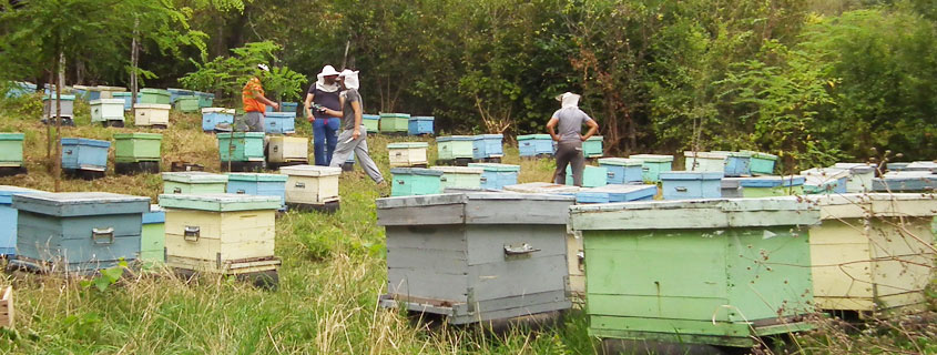 Selecting the Apiary Site