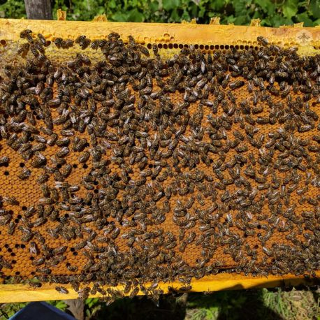 Bee Swarms on 4 Dadant Frames
