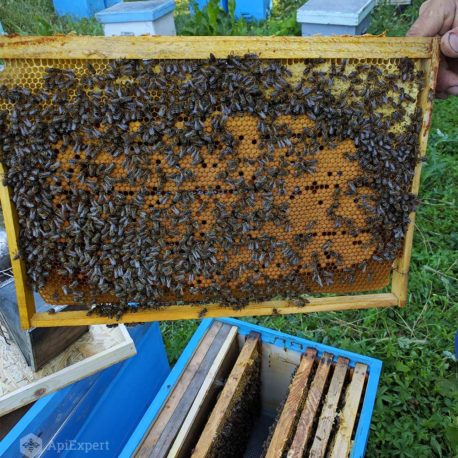 Bee Swarms on 6 Dadant Frames