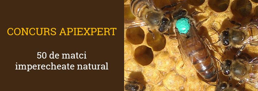 Concurso ApiExpert: 50 abejas reinas acopladas natural