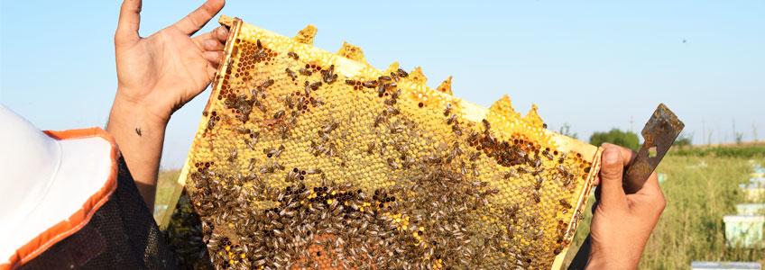 Presentación ApiExpert: Los efectos de los neonicotinoides en las abejas